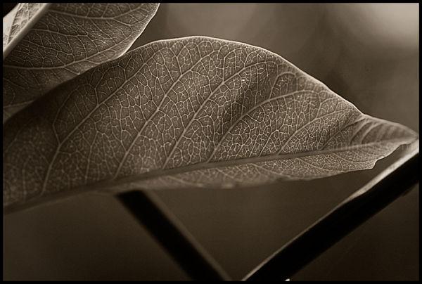 Leaves & Fence