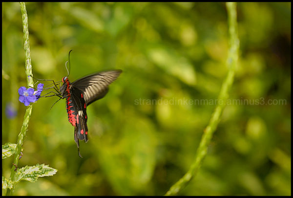 Butterfly, Sentosa, Singapore
