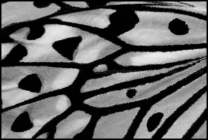 Insect wing texture - photo#18