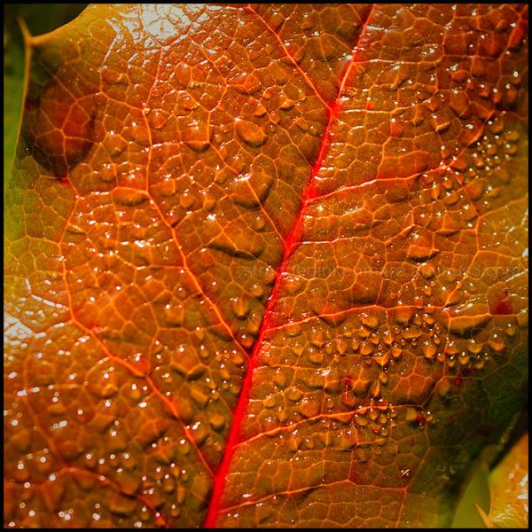 Haikus of Autumn #20