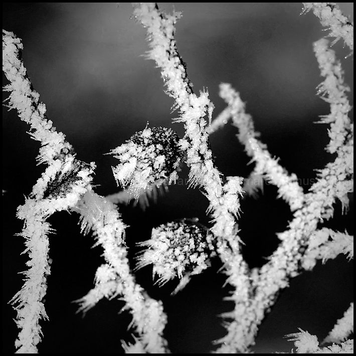 Poems of Winter #8
