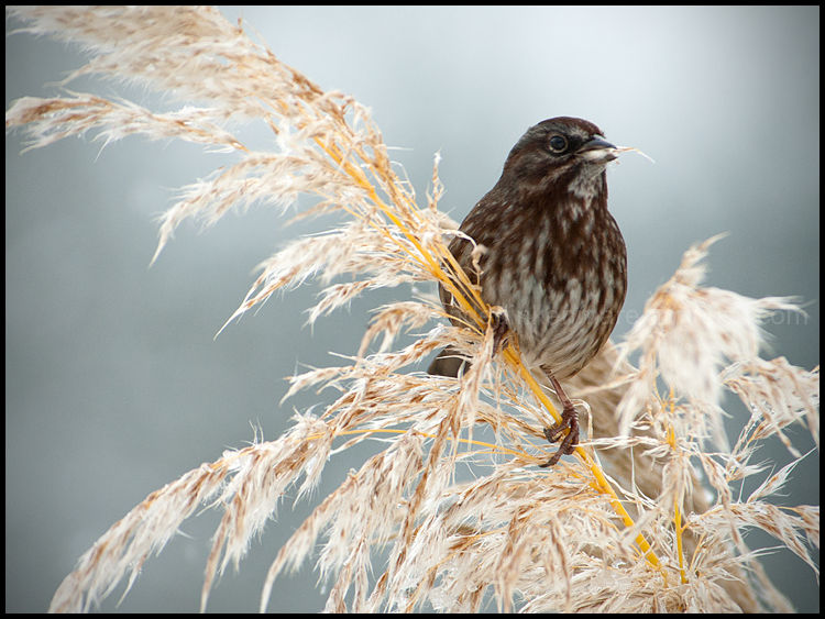 A Feast for Sparrows