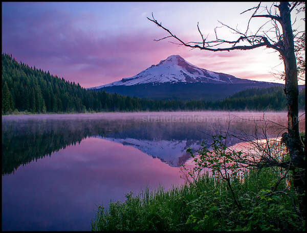 Morning, Trillium Lake