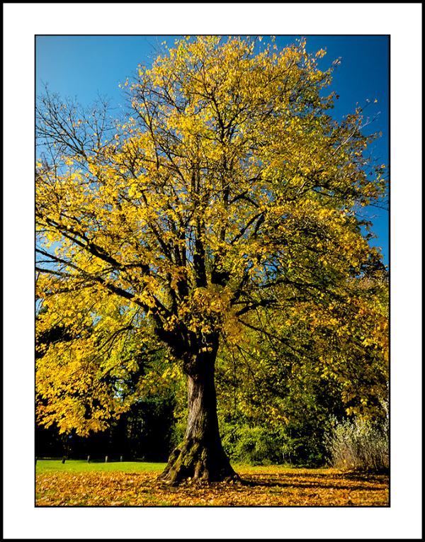 Week 44 Tree