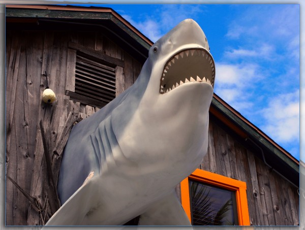 Jaws!!!