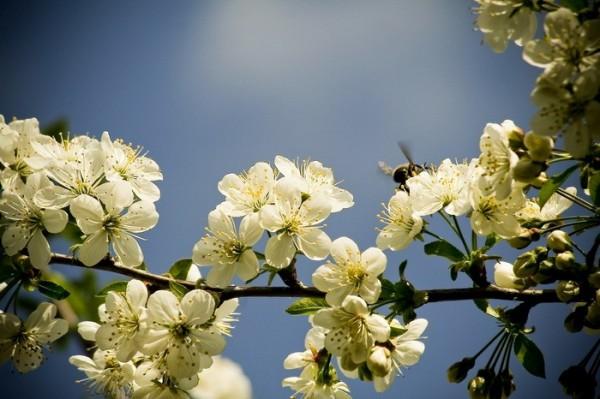 Spring #03