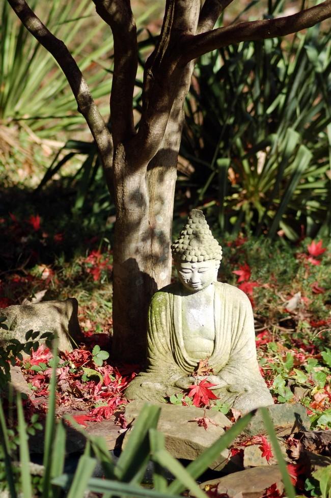 Buddha Statue under Japanese Maple Tree