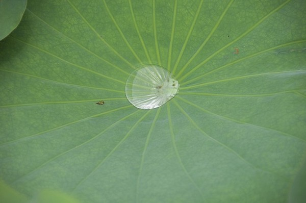 A leaf and water.