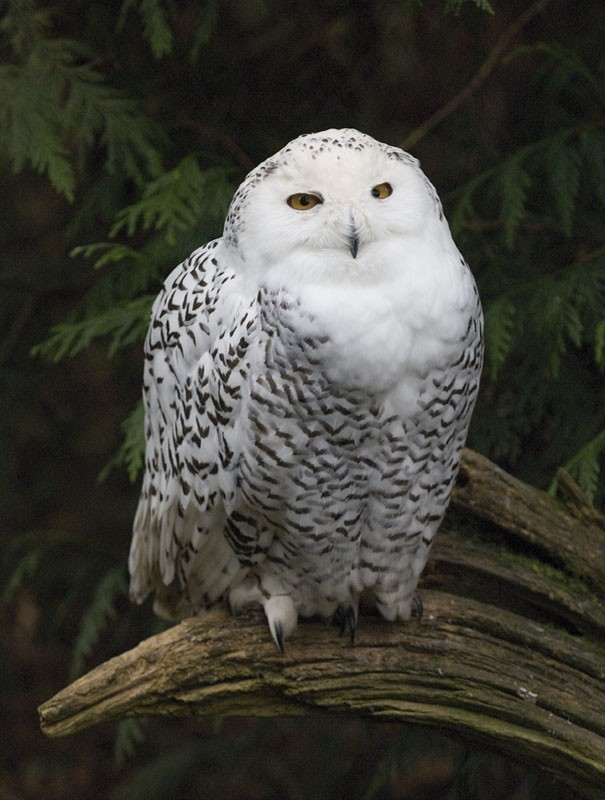 A wise owl.