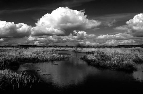 A wetland scene.