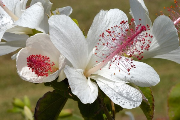 A white tropical flower.