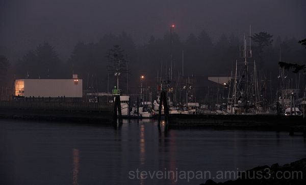 The La Push fishing fleet at rest.