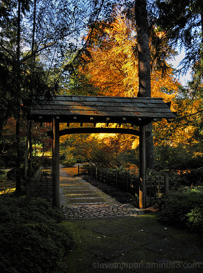 A Japanese gate and Katsura tree.