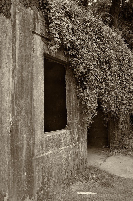 Vines reclaiming a building.