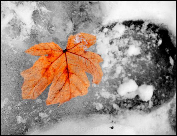 A leaf in an icy footprint.
