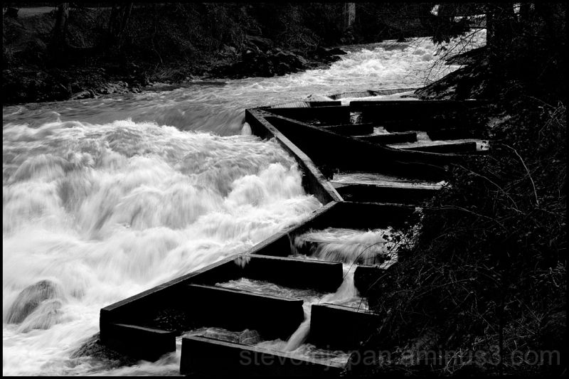 A fish ladder on the Deschutes River in WA.