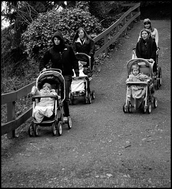 Women pushing strollers in an apparent race.