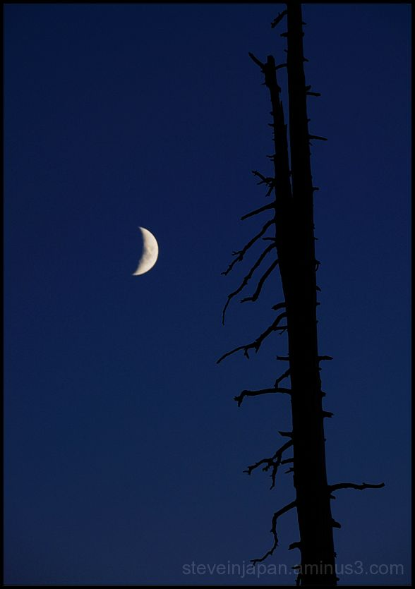 The moon and dead tree at Mt. Rainier.