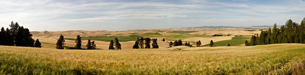 A panoramic view of the Palouse from Kamiak Butte.