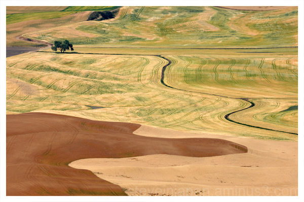 A pattern shot from Steptoe Butte in the Palouse.