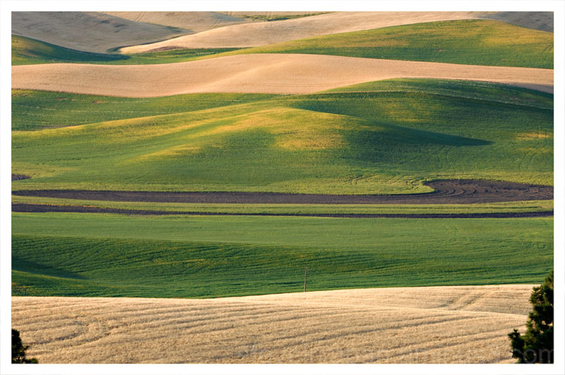 A pattern shot from Kamiak Butte in the Palouse.
