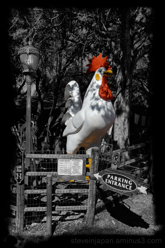 A giant rooster at a tourist trap in Sedona, AZ.