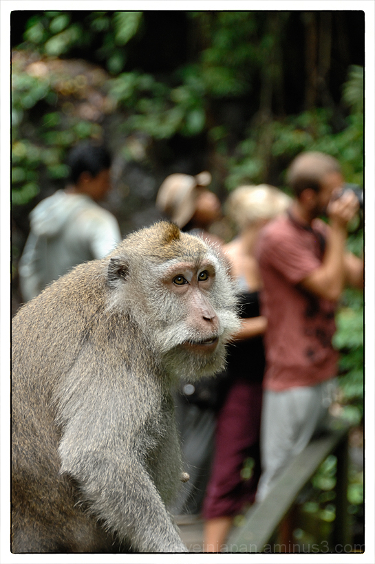 A monkey watching the tourists.