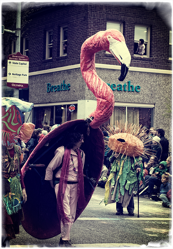 A Flamingo at the Procession of the Species.
