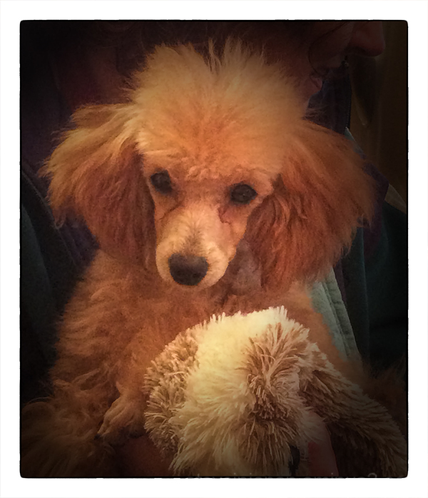 Portia's first haircut.