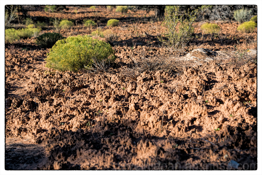 A biological soil crust at Hovenweep NM.