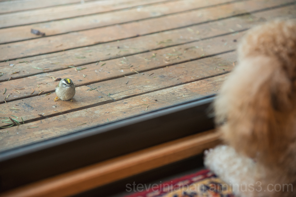Portia and the stunned bird.
