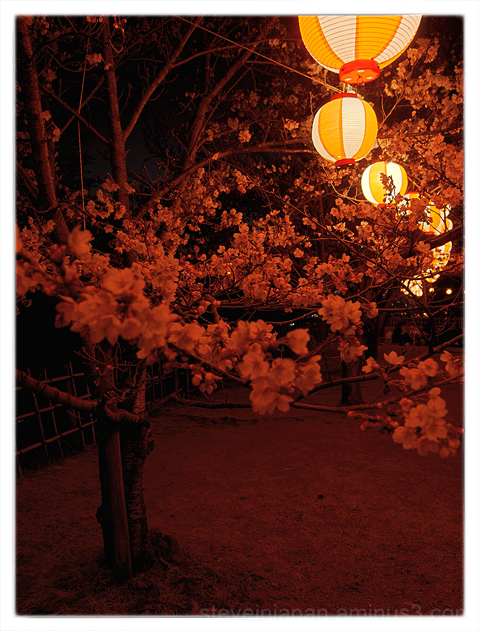 Sakura at Fukuyama Castle under the lights.