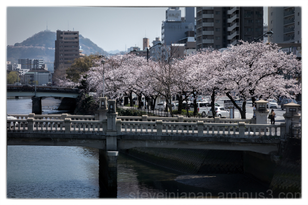 Sakura by the river in Hiroshima.