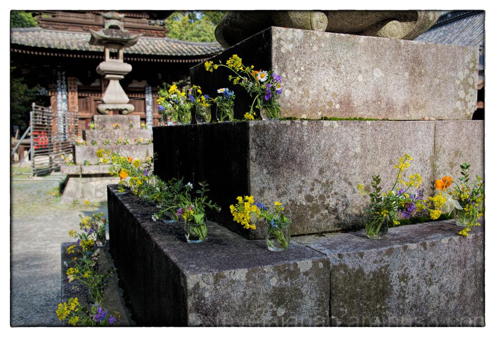 Flowers at Ishite-ji in Matsuyama, Japan.