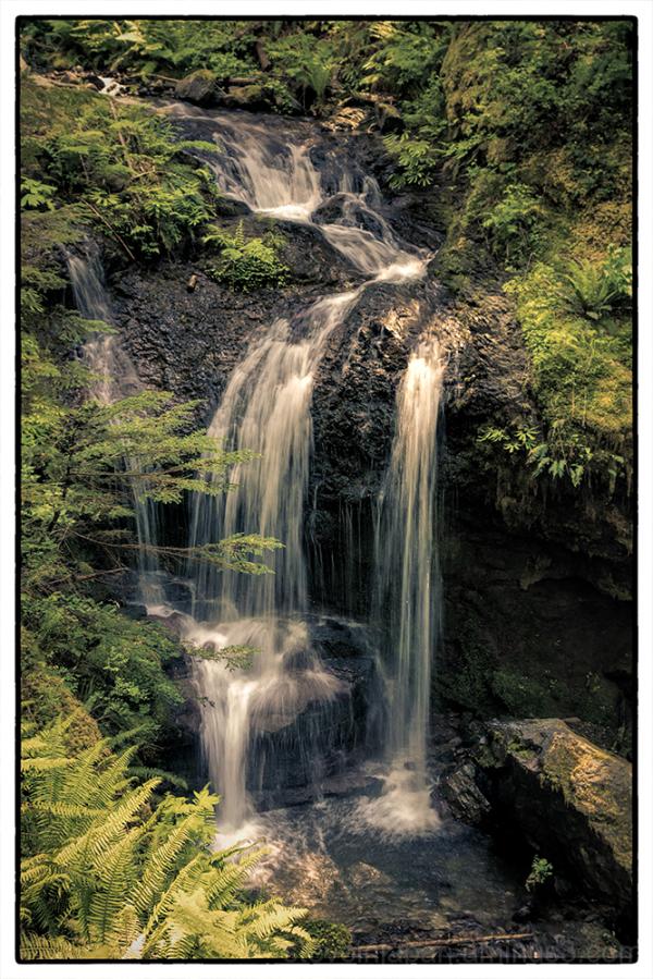 On the Covel Creek Falls trail.