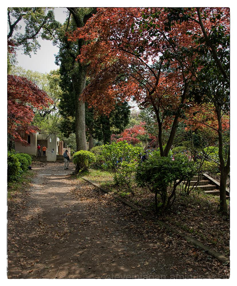 The Daibutsu Hiking Course in Kamakura, Japan.