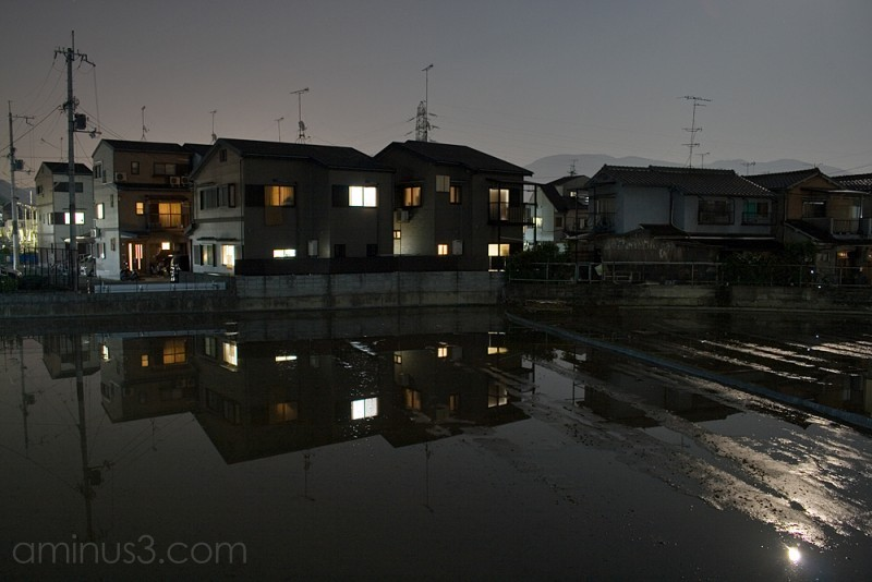 Moon-lit Rice Paddy