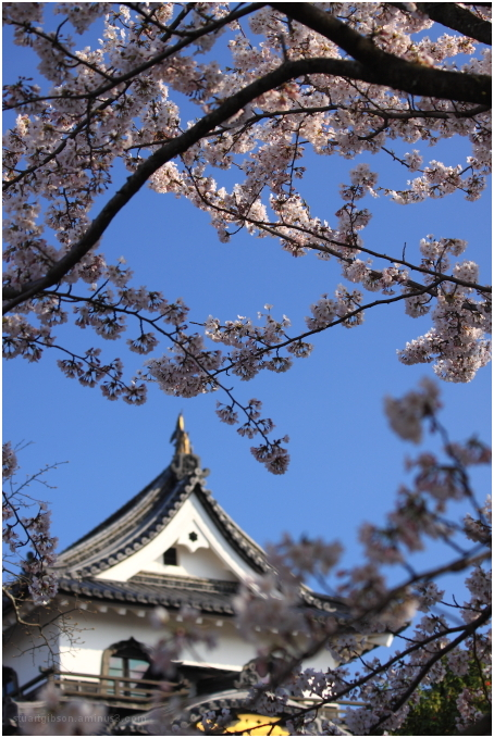 彦根城 -  Hikone Castle