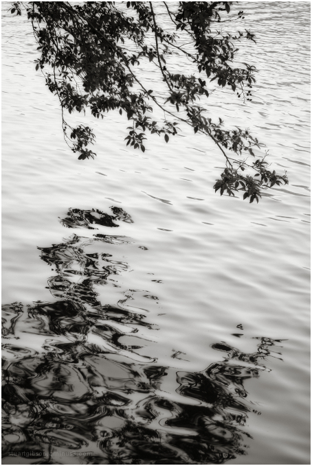 water and leaves