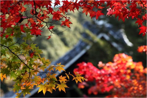 Fall, Nanzenji - 南禅寺