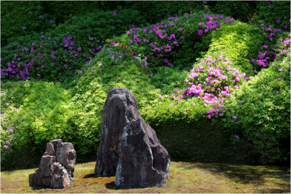 spring azalias