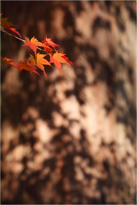 Fall, at Shinnyodo 真如堂