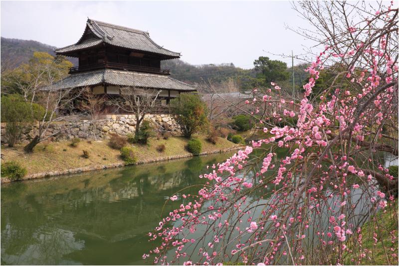 Spring, at Iwakuni 岩国