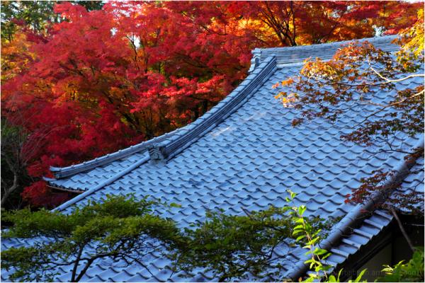 Kyoto, November