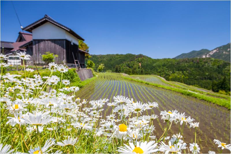 spring, in Takashima