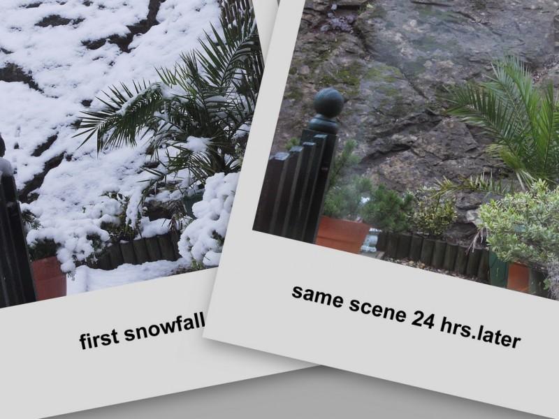 snow--no snow