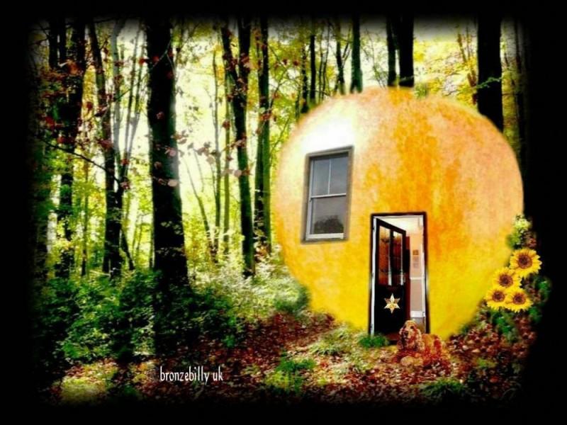 apple woodhouse dog sunflowers