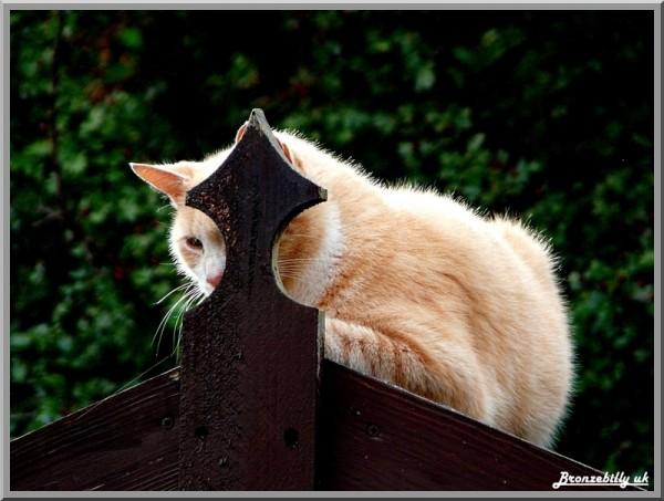 cat ginger hiding