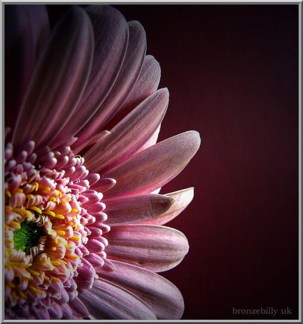 pink flower macro spring bronzebilly
