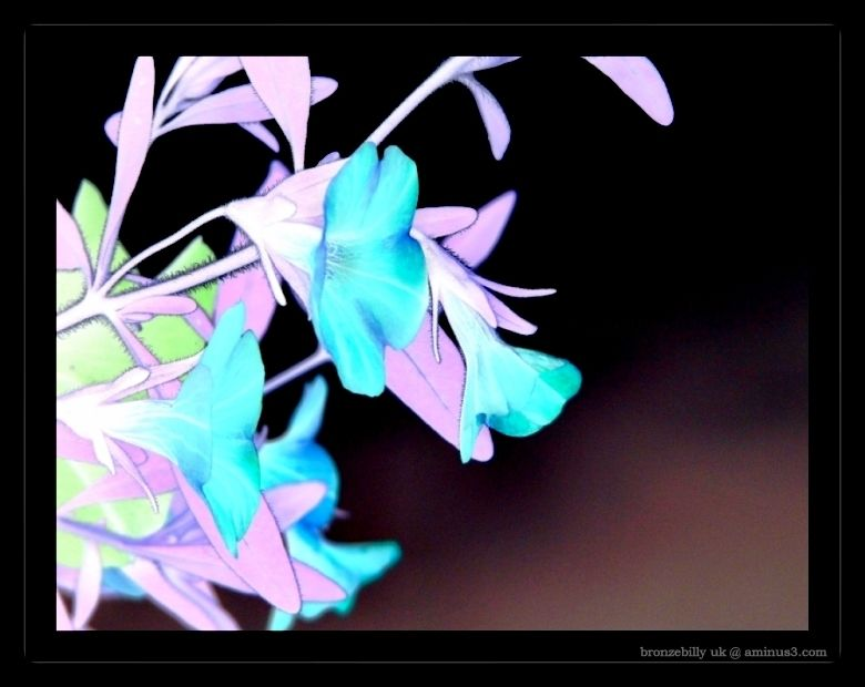 flower inverted colour frame bronzebilly